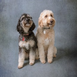 pet-family-children-photographer-sussex-surrey-kent